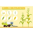 Growth stages from seed to adult plant vector image