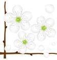 Painted apple tree flower vector image