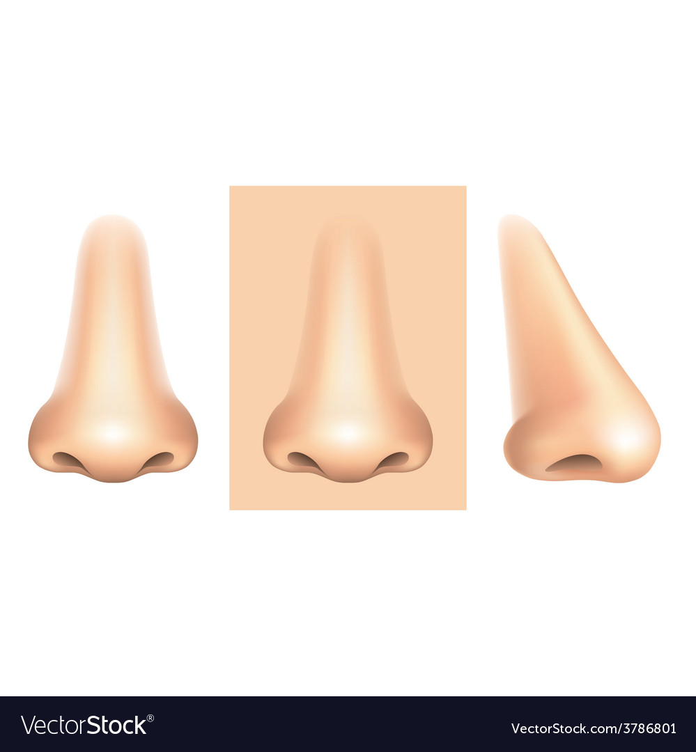 Nose isolated vector