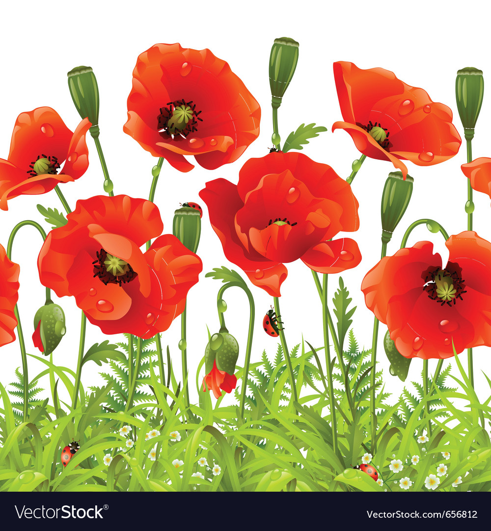 Red flower and green grass vector