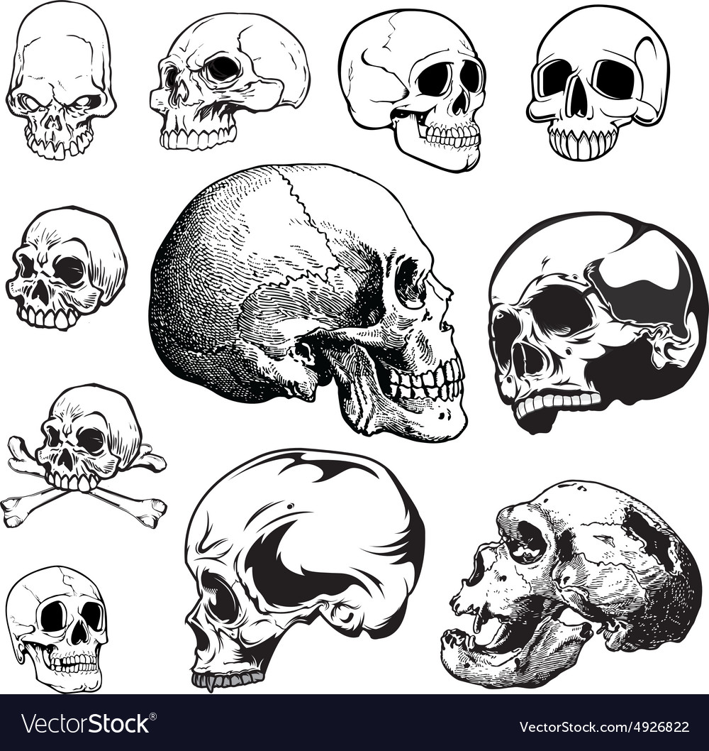 Set of skulls vector