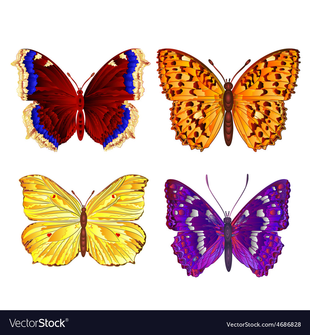 Butterflies various mountain meadow and forest vector