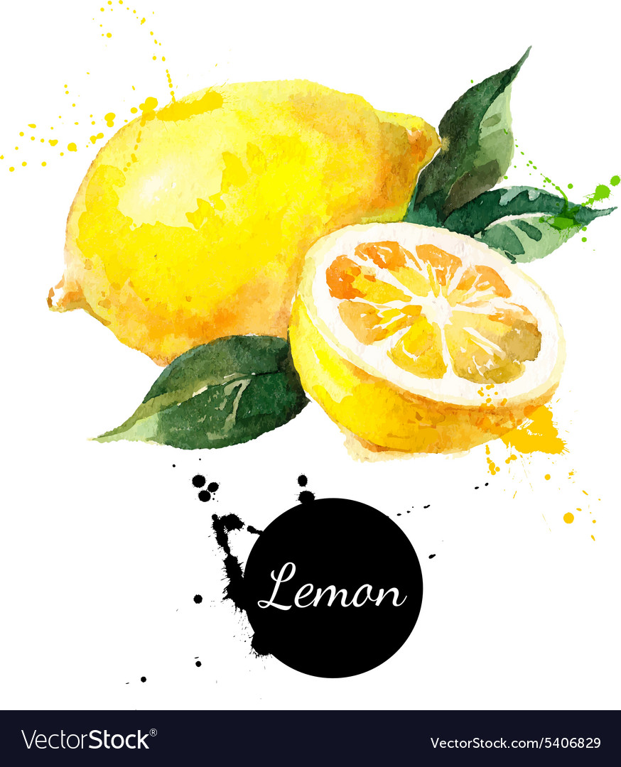 Hand drawn watercolor painting lemon on white vector