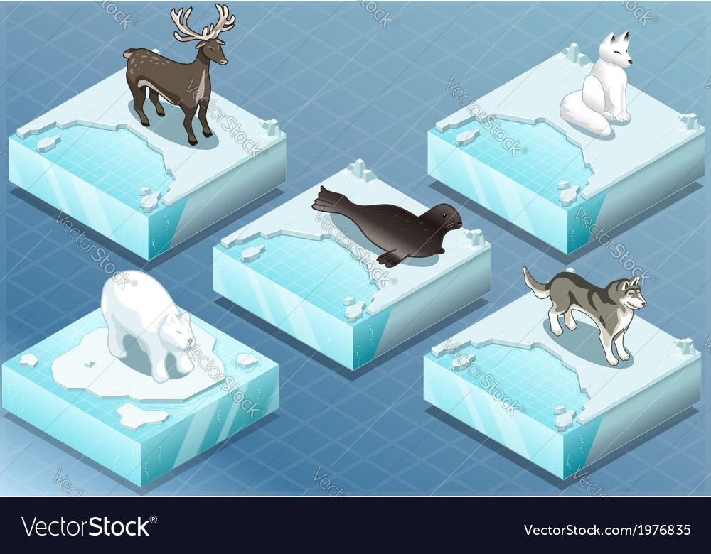 Isometric arctic animals on ice vector
