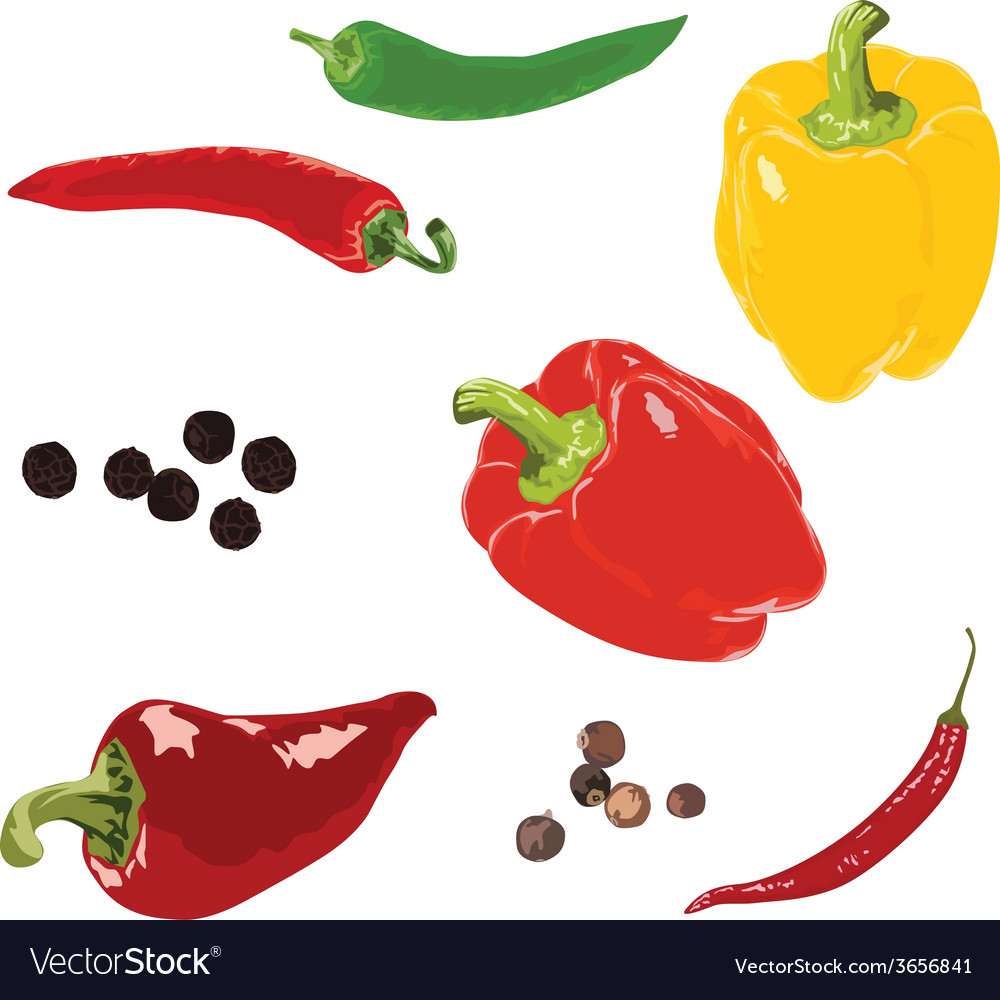 Different peppers on a white background vector