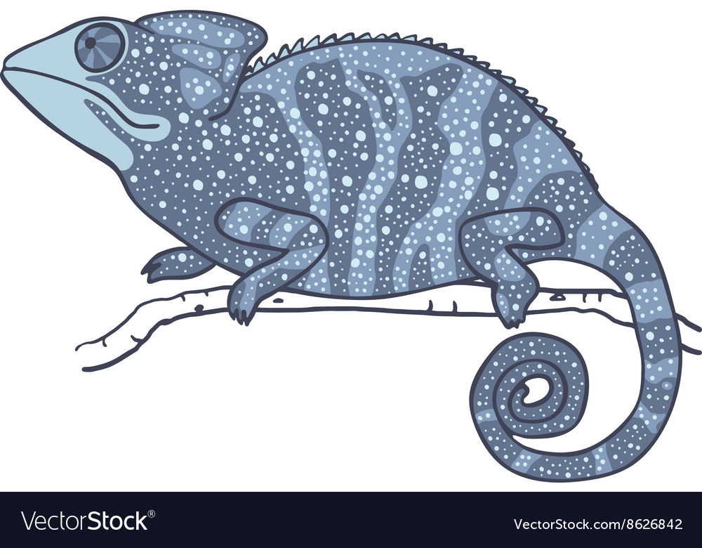 Chameleon isolated on white vector