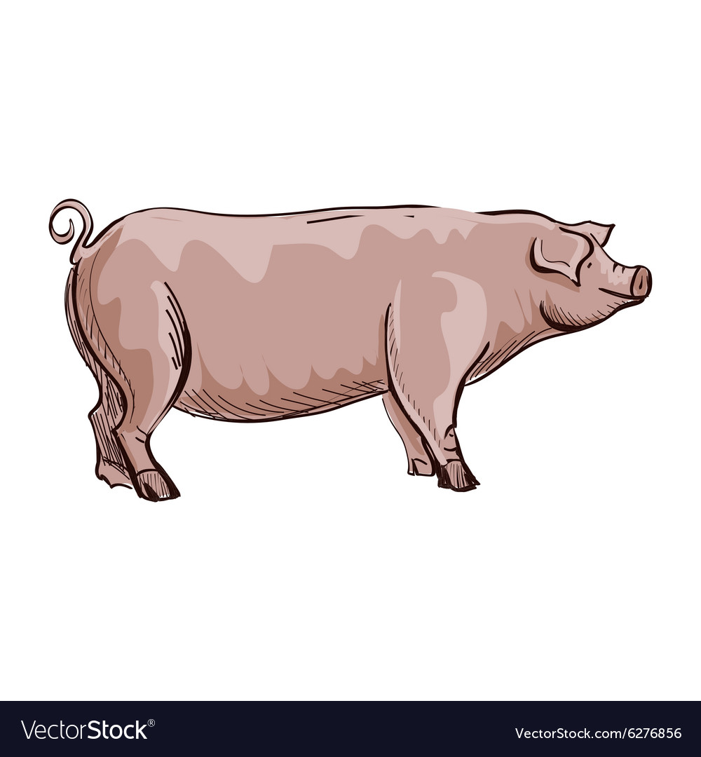 Doodle pig vector