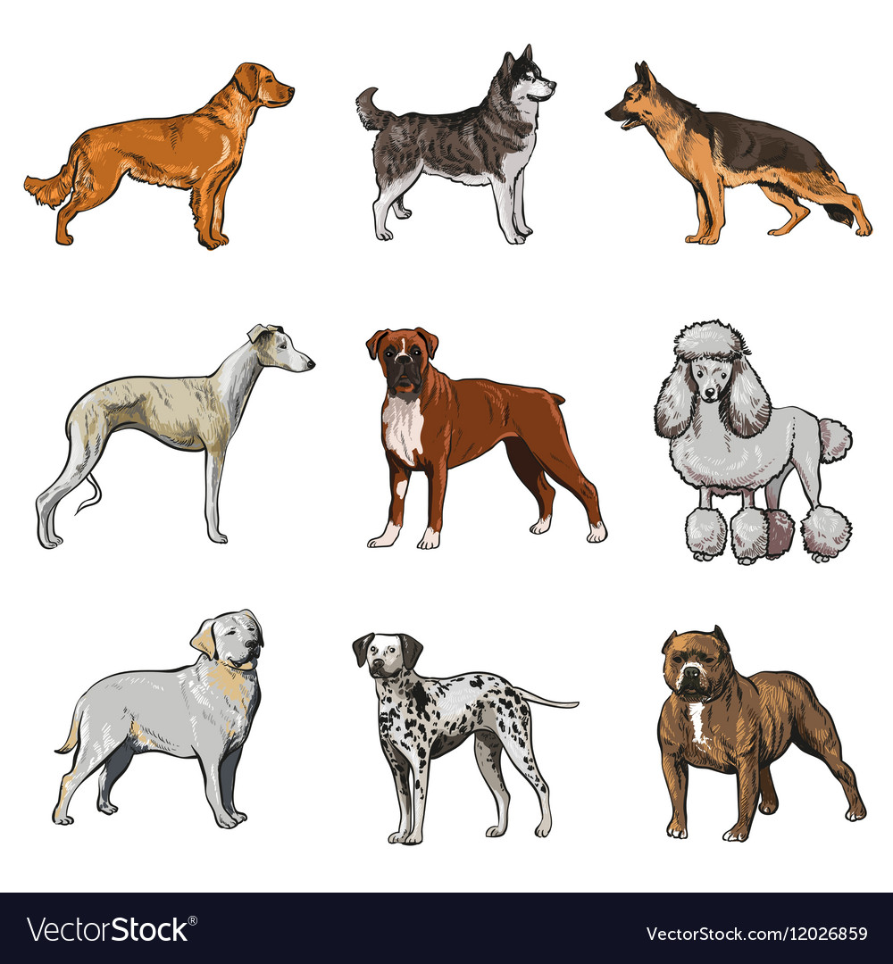 Dog breed collection vector