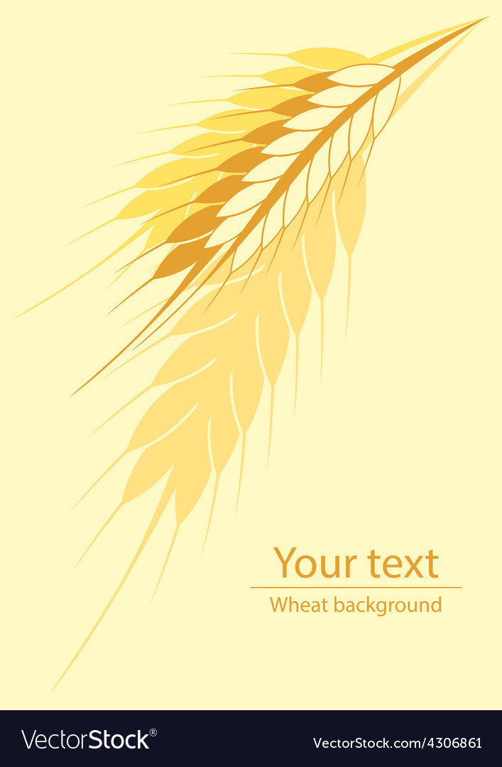 Wheat vertical background vector