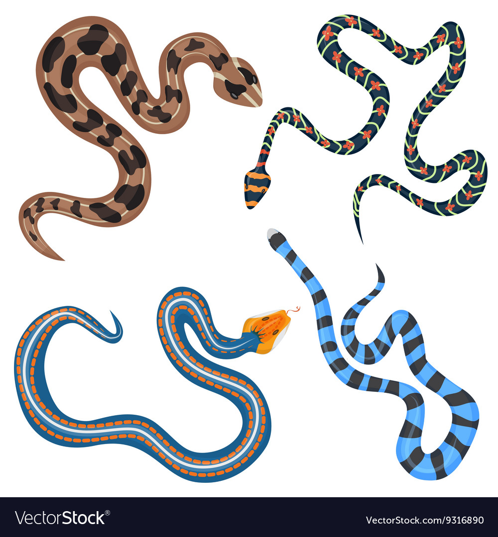 Colorful tropical snakes collection set top vector