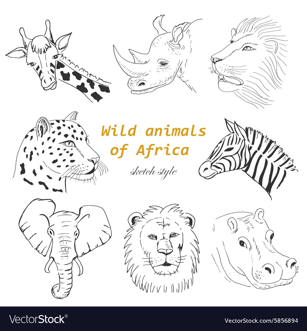 Set of wild animals of africa in sketch style vector