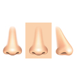 nose isolated vector image