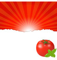 Red Tomato vector image