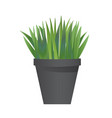 grass with pot vector image
