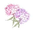 Hydrangea Vintage Botanical vector image