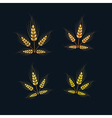 Ears of Wheat Set on Dark Background vector image