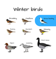 Set of colorful winter bird icons vector image