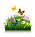 summer flowers with butterfly vector image vector image