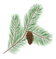 Pine cone with pine needles vector image