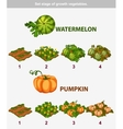 stage of growth vegetables Watermelon and Pumpkin vector image