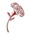carnation flower vector image vector image