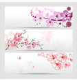 cherry blossom banners set vector image