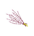 bunch of spring willow branches tied with ribbon vector image