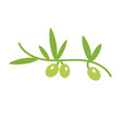 unusual olive branch isolated logo icon vector image