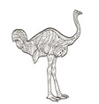 coloring ostrich bird for adults vector image