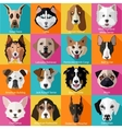 Set of flat dogs icons vector image
