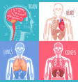 human internal organs design concept vector image