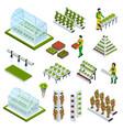 hydroponics icons set vector image