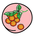 Fresh Juicy Rambutans on Round Pink Background vector image