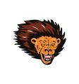 Lion Big Cat Head vector image