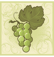 Retro-styled green grape bunch vector image vector image