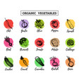 organic vegetables cards set farm eco vector image