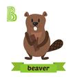 Beaver B letter Cute children animal alphabet in vector image
