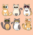 trendy serious cats with sunglasses vector image