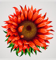 realistic beautiful flower red flower summer or vector image