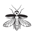 Firefly Insect Black Inky Drawing vector image vector image