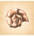 abstract chocolate cochlea vector image