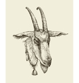 Hand drawn goat Sketch a farm animal vector image