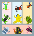 frog cartoon tropical animal cards cartoon vector image