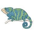 chameleon isolated on white vector image