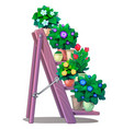 set of decorative plants in pots on stairs shelves vector image