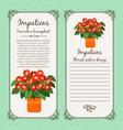 vintage label with impatiens plant vector image