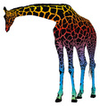 giraffe rainbow vector image vector image