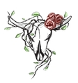 Cow Skull with Romantic Roses Tattoo vector image