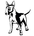 decorative standing portrait of dog bull terrier vector image