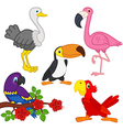 set of isolated exotic birds vector image